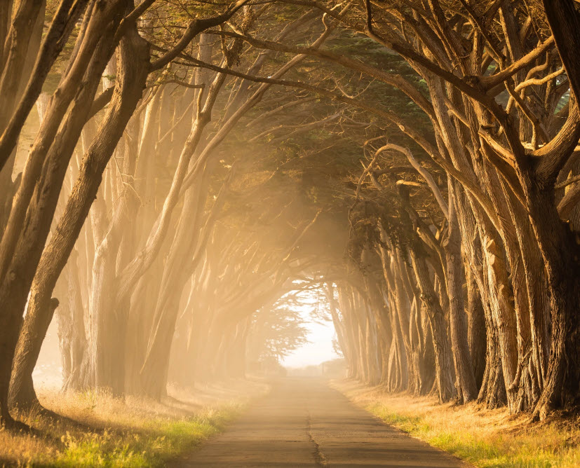 An empty road surrounded by trees with beams of golden light shining between.