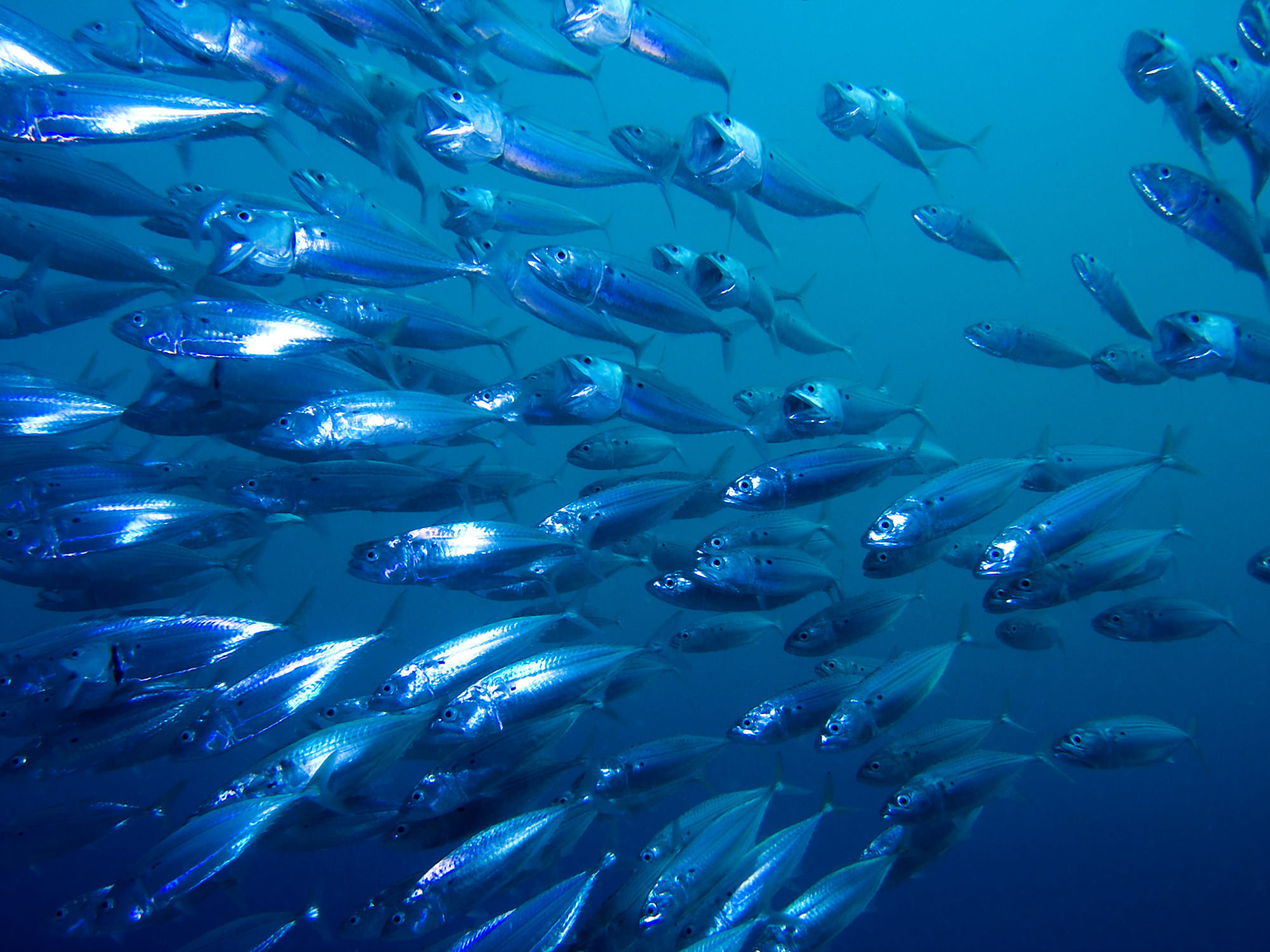 HumanNature Fish