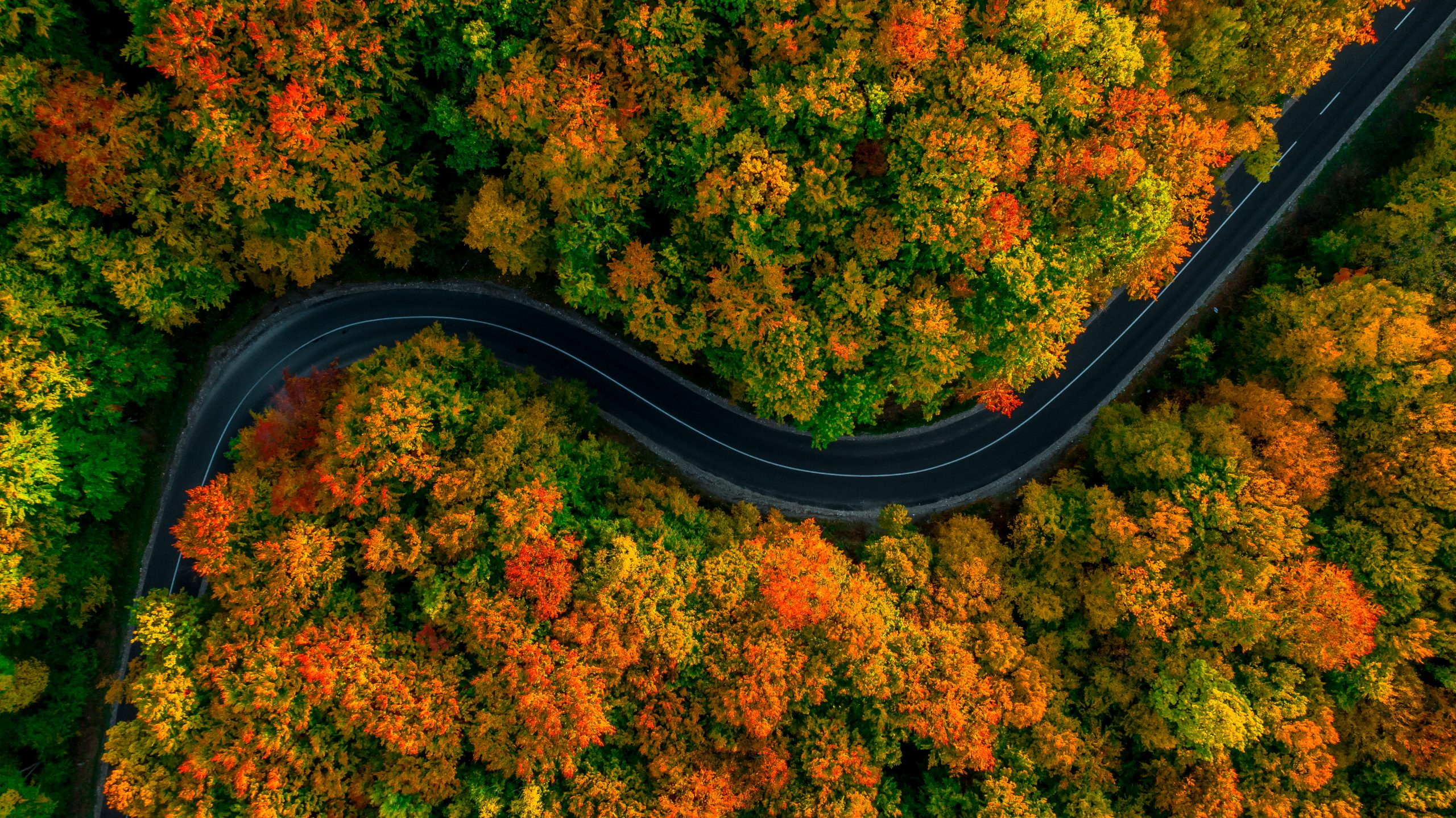 An aerial view of a winding road through a forest of autumn colours of green reds and orange